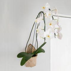 cesta pipa suporte para orquídeas