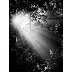 luzes da mata fotografia