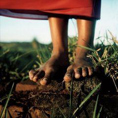 fotografia raízes alan nielsen